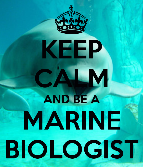 marine biology as a career Marine biology is the scientific study of organisms that live in salt water a marine biologist, by definition, is a person that studies, or works with a salt water organism or organisms that is a fairly brief definition for a very general term, as marine biology encompasses many things marine.