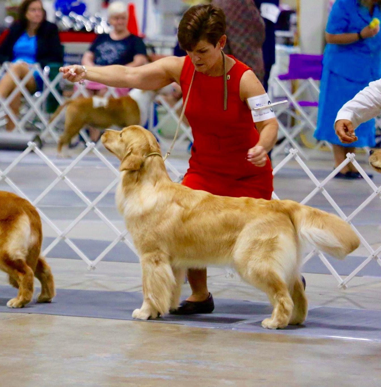 Am Ch Pebwin Reverie Soothsayer Cgc Sayer Dog Training Farm