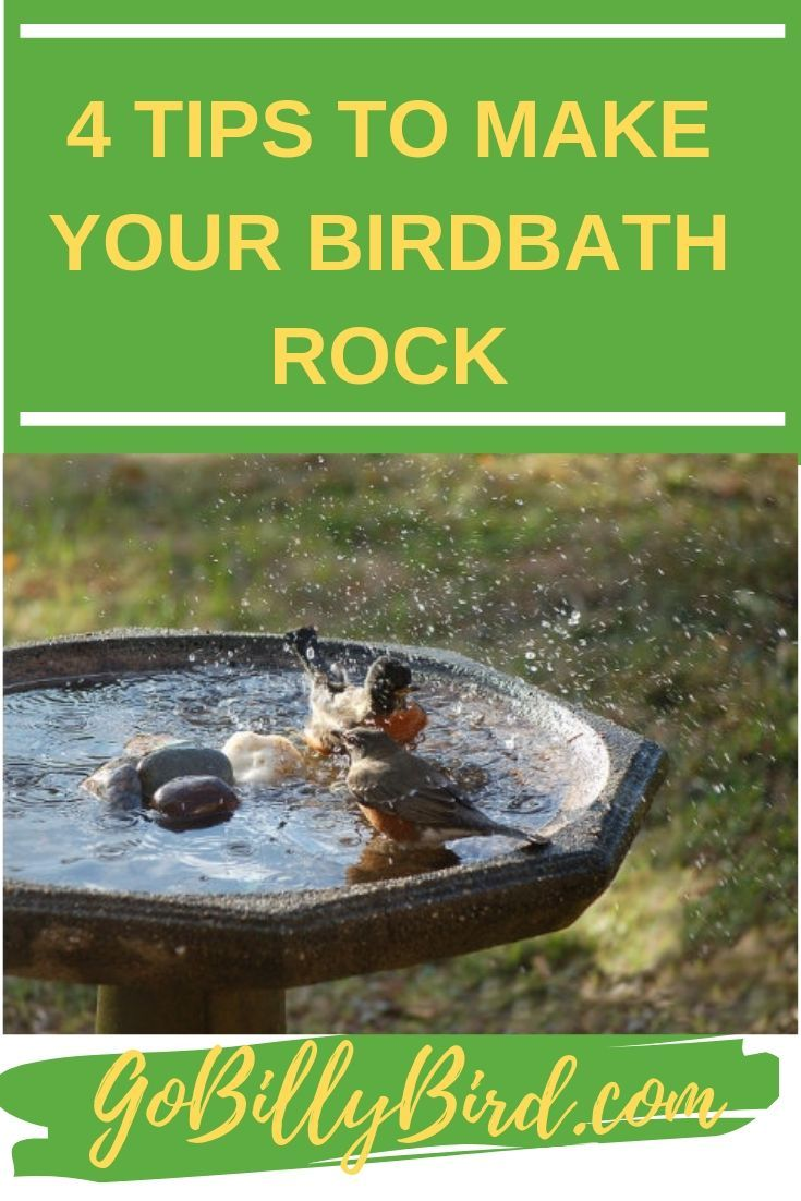 how to attract birds to bird bath