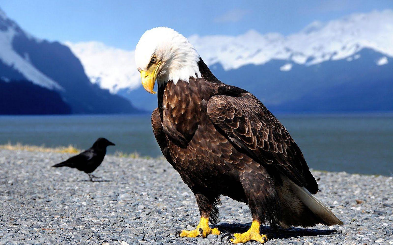 Fantastic Wallpaper Horse Eagle - b42559196ab501d60d0ec85e54816f9f  You Should Have_312474.jpg
