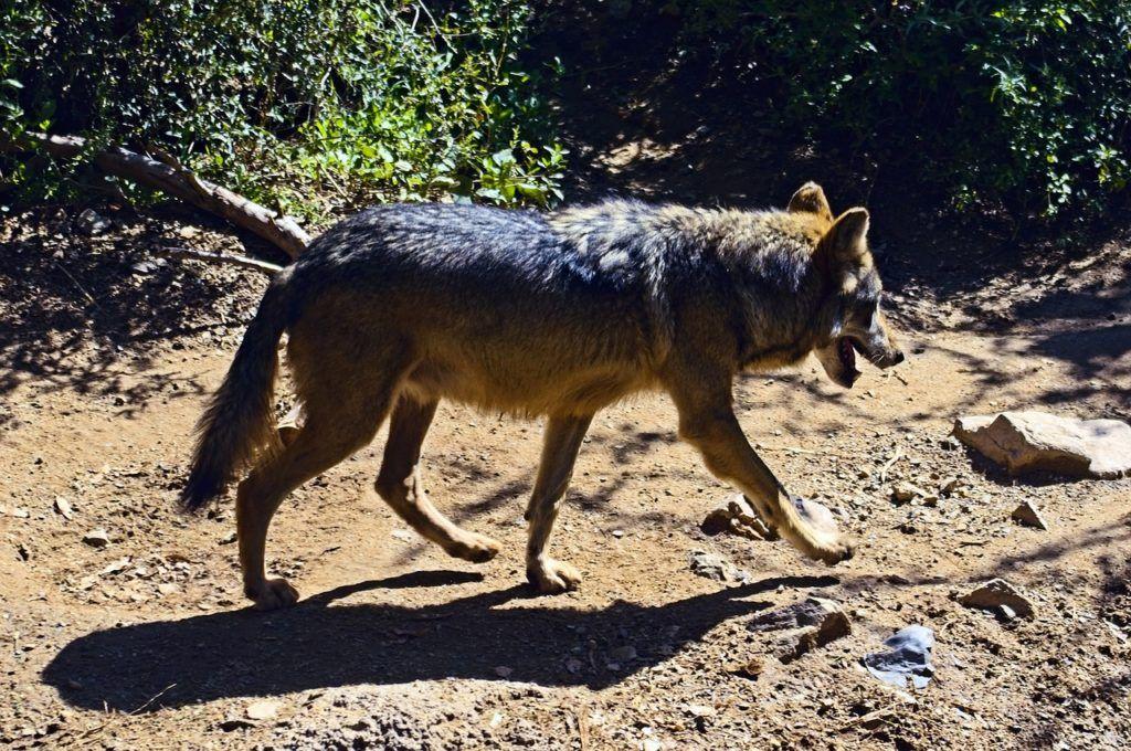 Pin En Animales En Peligro De Extinción
