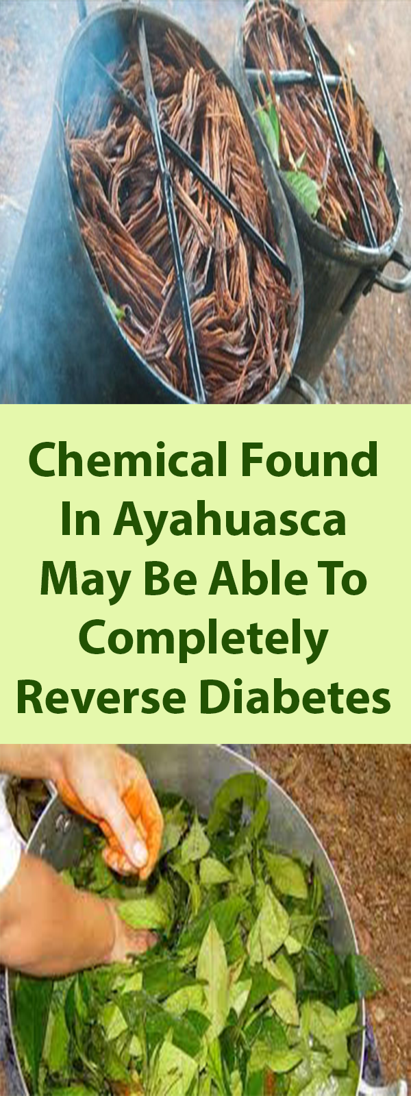 Chemical Found In Ayahuasca May Be Able To Completely Reverse Diabetes Http Www Feelinglively Com C Diabetic Diet Food List Prediabetic Diet Reverse Diabetes