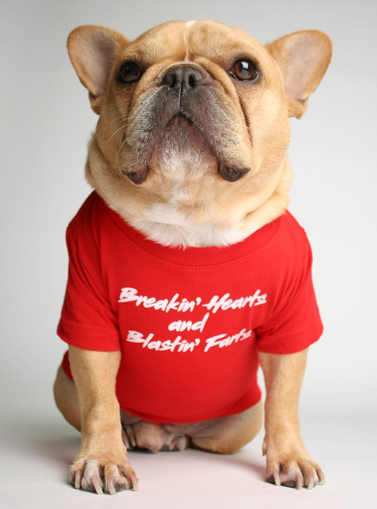 Breakin Hearts Blastin Farts Dog Tee Dog Shirt French