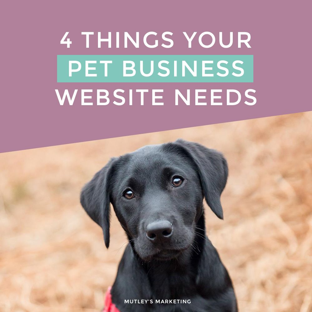 How To Set Up A Successful Dog Walking Business in 2020