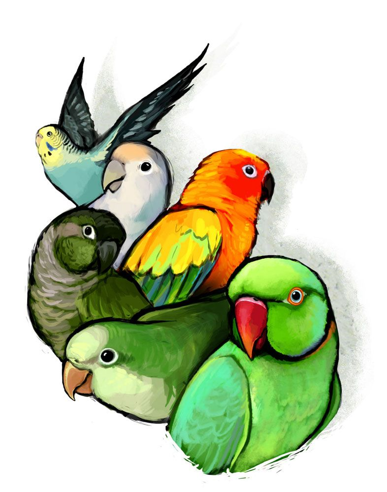 Just For Fun With Images Parrots Art Bird Drawings Animal