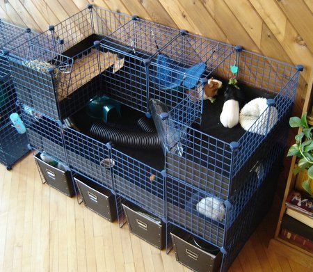 Pin On Guineapig Cages