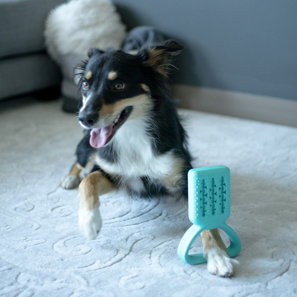 Brush tuggy dental play tool the fun way to brush your