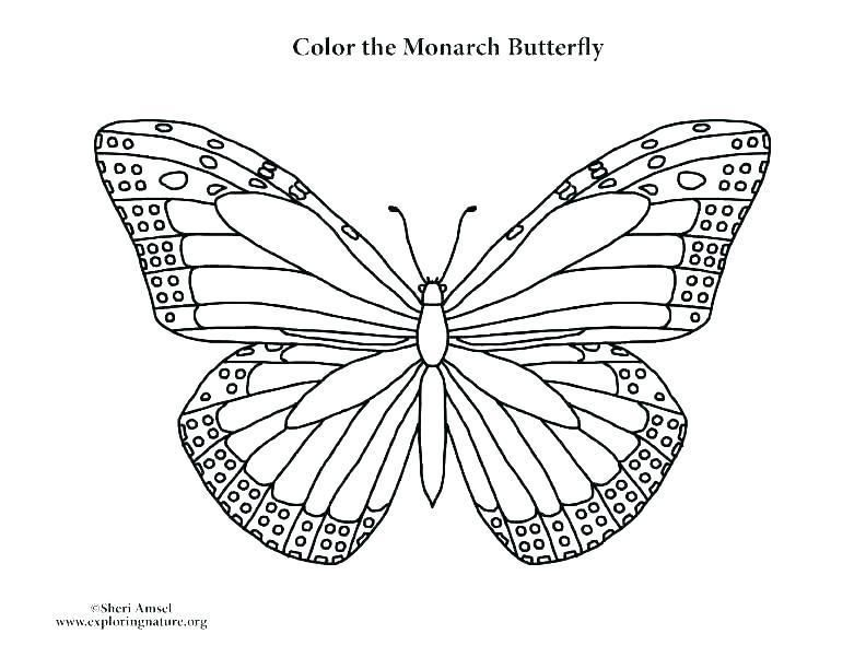 Monarch Butterfly Coloring Page Monarch Butterfly Coloring Pages