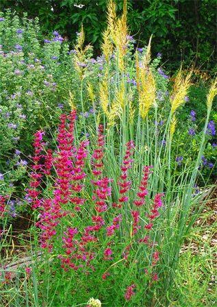 Ornamental Grass Garden Plan Native grasses and companion plants grasses pinterest native grasses and companion plants workwithnaturefo