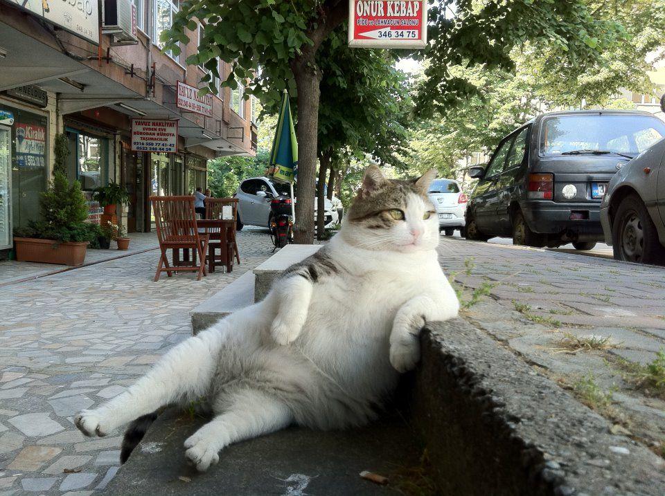 MY CAT ART - zambayes - 2012年上半期:人気のあった画像トップ20 - そんなあなたに