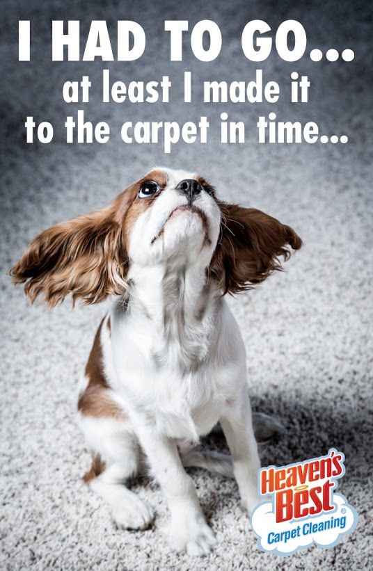 Heaven S Best Can Help You With All Of Your Carpet Cleaning Needs