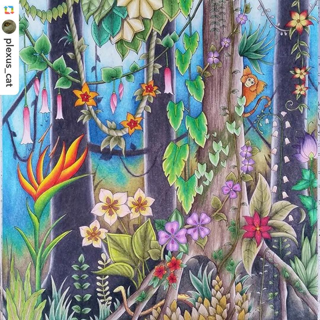magical jungle the magical jungle pinterest johanna basford