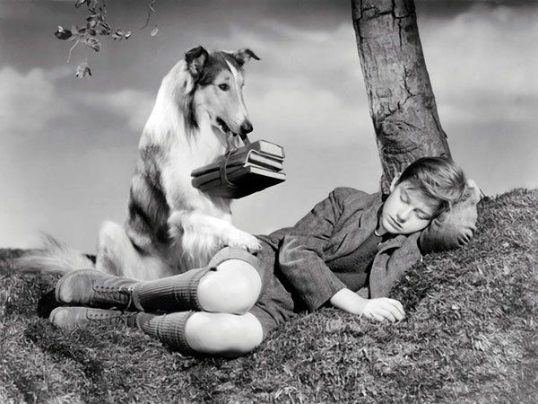 10 of the Most Beloved Dogs inLiterature  --  By Emily Temple  -Lassie, Lassie Come-Home  Though most people probably know Lassie from her on-screen franchise (twelve movies and several seasons of television), she originated in a 1938 Saturday Evening Post story by Eric Knight, later expanded into his 1940 novel Lassie Come-Home, which chronicles the dog's trek to get back to the boy she loves so dearly. -