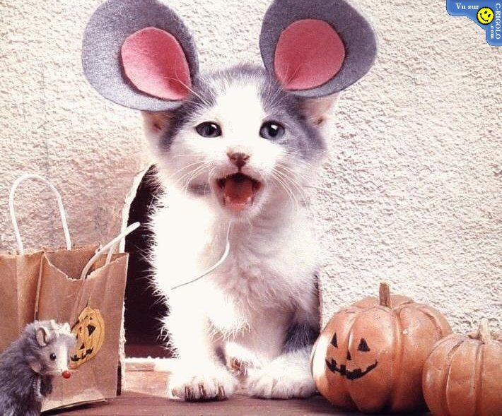 funny cat halloween costumes funny halloween - Funny Cat Halloween