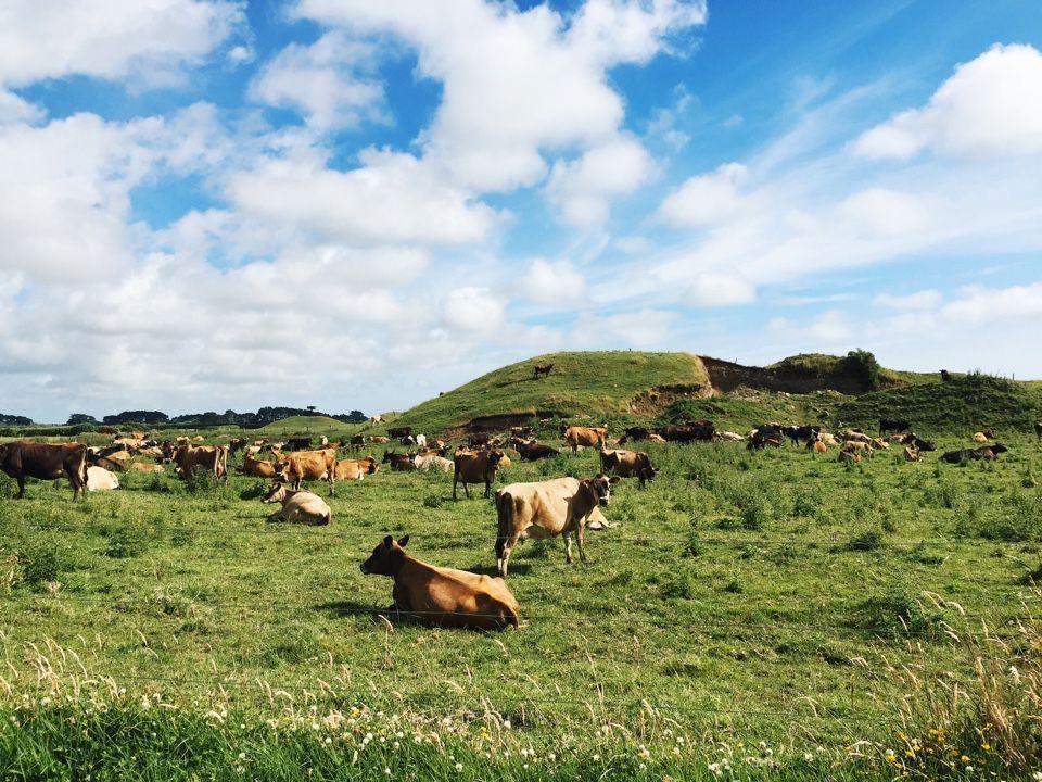 Луга Новой Зеландии