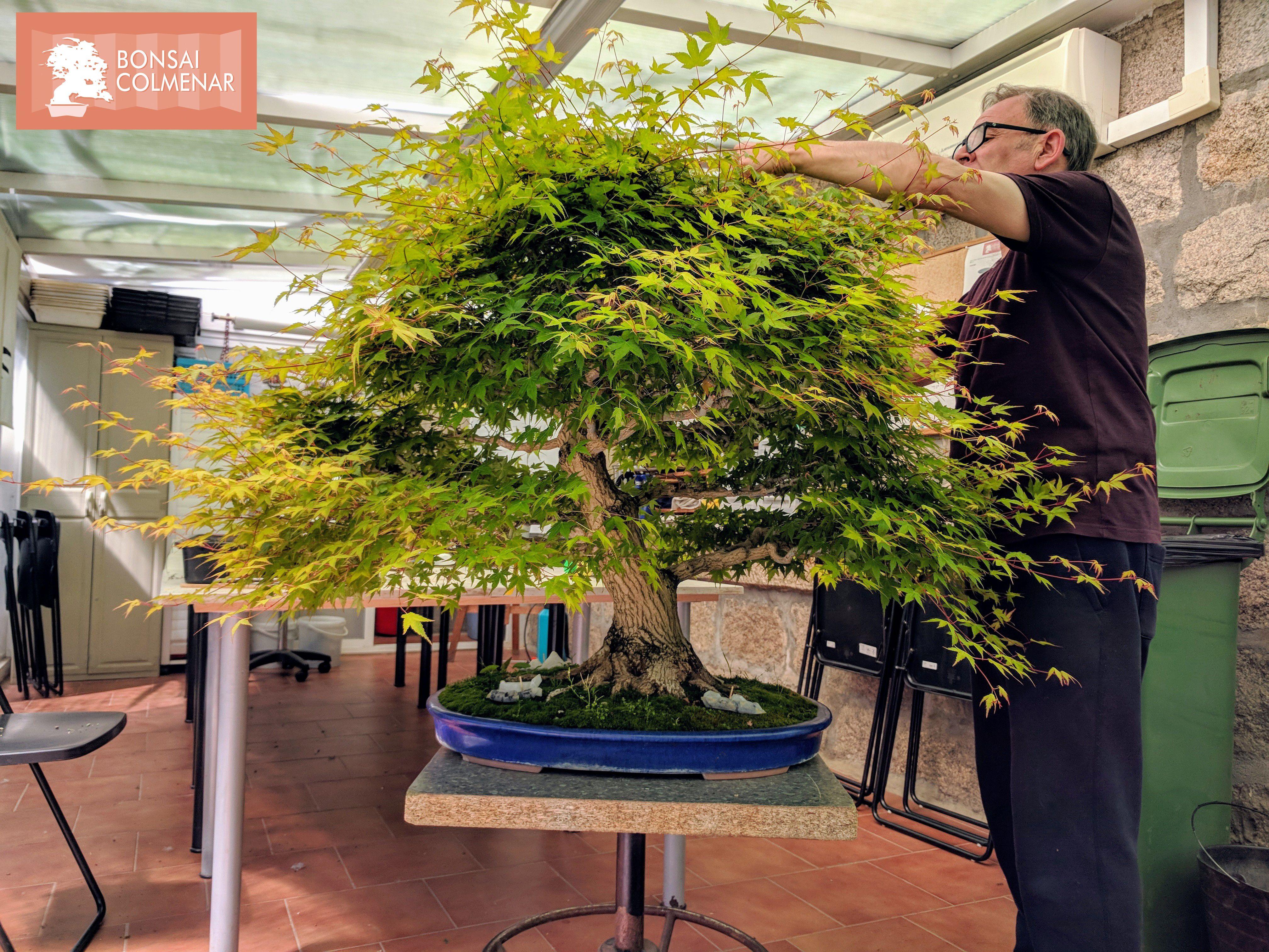 Aprende Bonsai Con Nosotros Cursos Y Talleres Todo El Año Bonsai Colmenar Desde 1999 Tienda Y Escuela De Bonsai Bonsai árboles Bonsai Jardín De Bonsáis