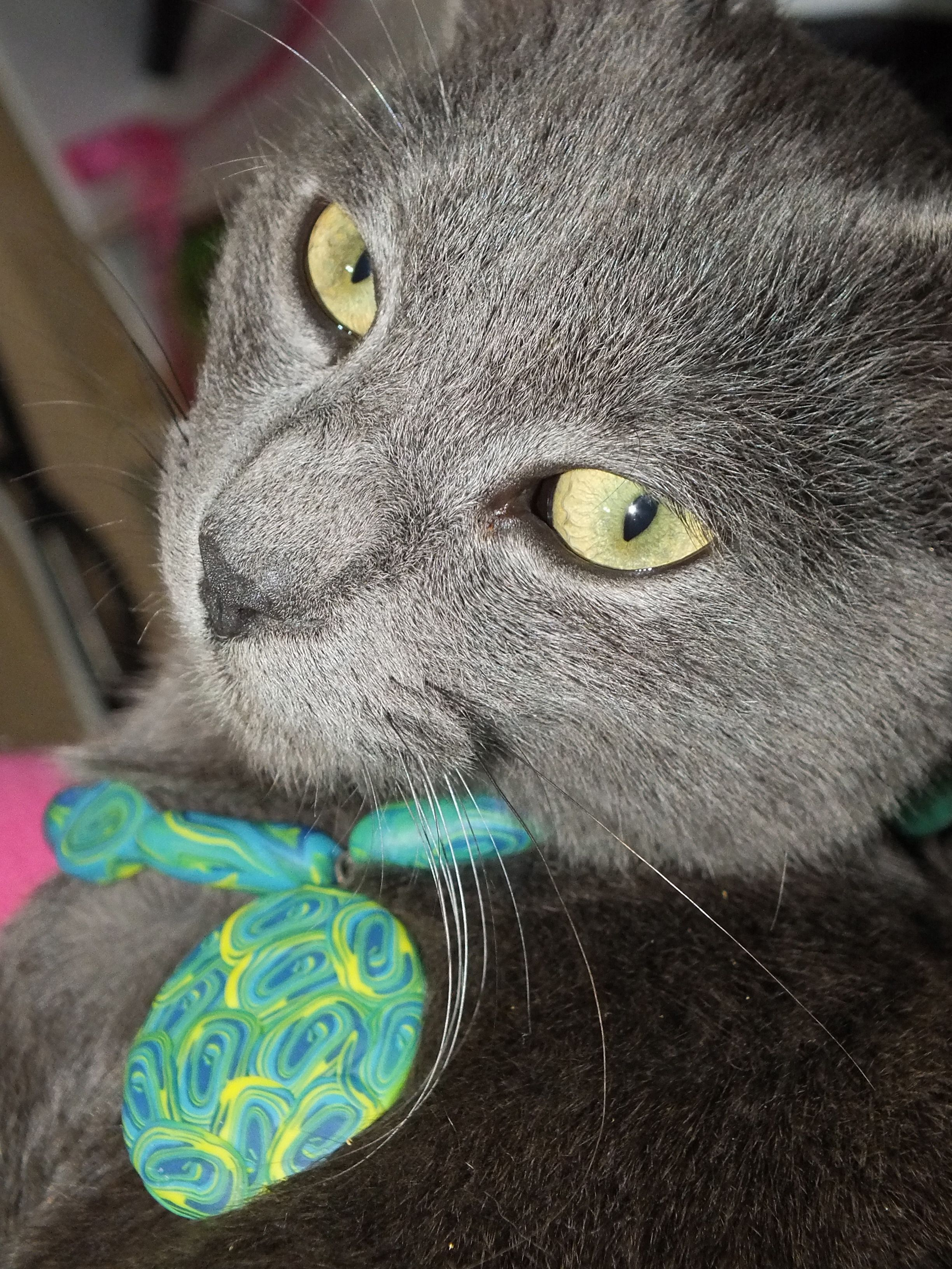 polimer clay pendant on a sweet model, my cat