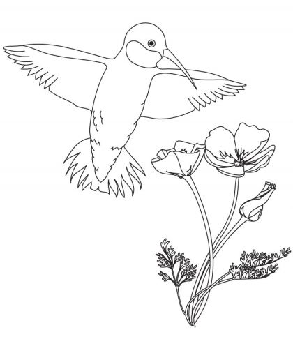 hummingbird with flower coloring pages download free hummingbird with flower coloring pages for kids - Hummingbird Flower Coloring Pages