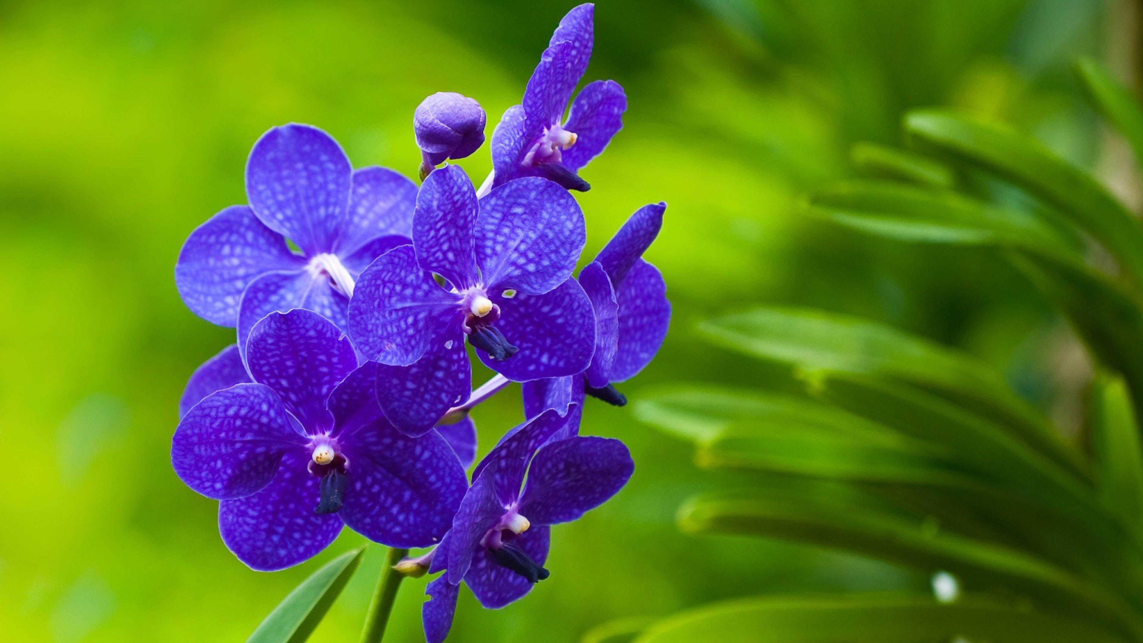 Amazing Close Up On Purple Flower 3840x2160 4k 16 9 Ultra Hd Orchid Wallpaper Flower Iphone Wallpaper Purple Flowers Wallpaper