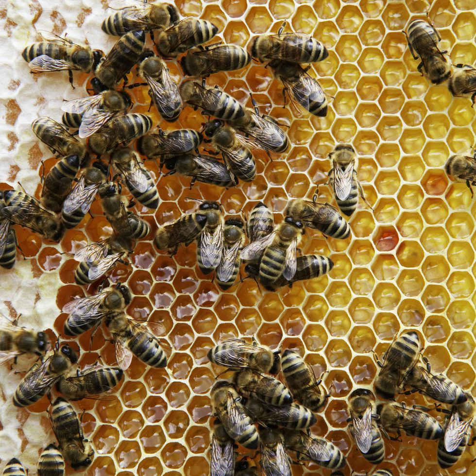 Beekeeping for Beginners: How to Start Your Own Backyard ...
