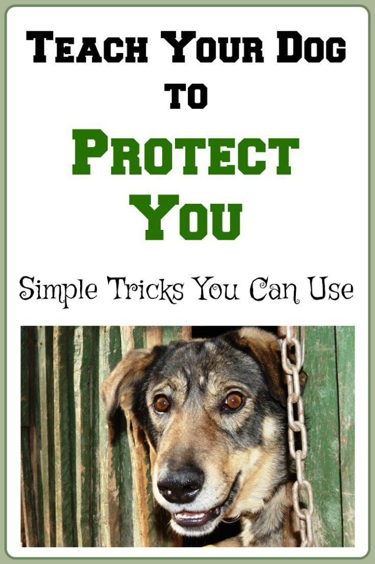 Teach Your Dog To Protect You Teachdog Dogtraining Dog Clicker