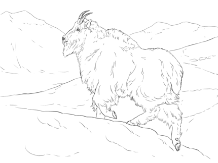 Realistic Mountain Goat Coloring Page Supercoloring Com Coloring Pages Mountain Goat Realistic