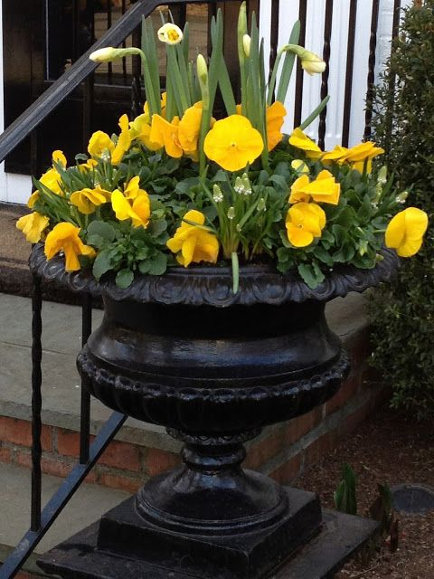 Elegant Spring Urn Yellow Pansies Amp Daffodils Container