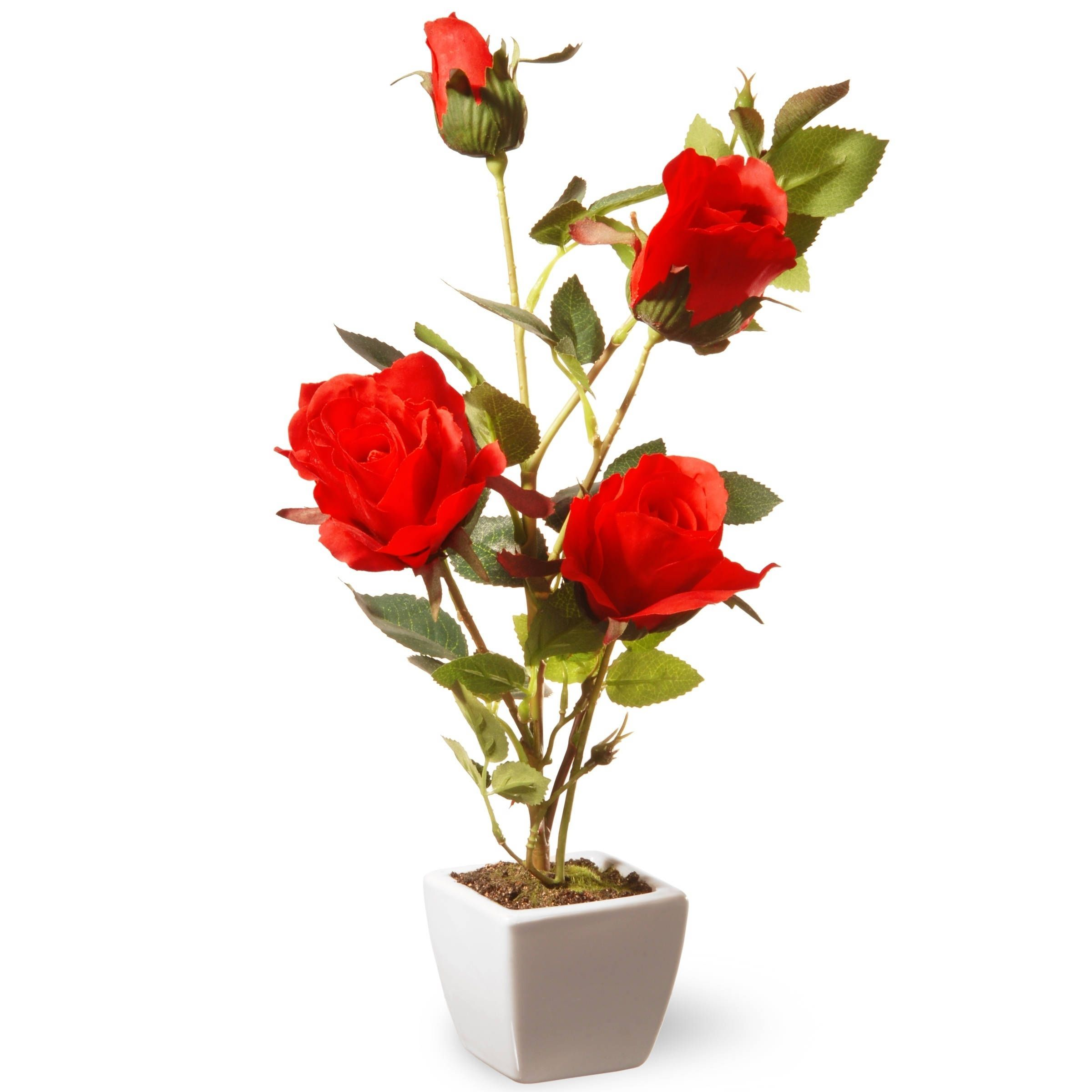 15 Rose Flower Products Pinterest Red Rose Flower Outlet
