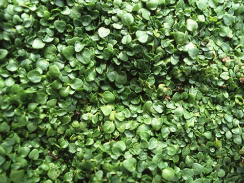11 Gorgeous Ground Cover Perennials For Any Yard Ground Cover Plants Ground Cover Ground Cover Flowers