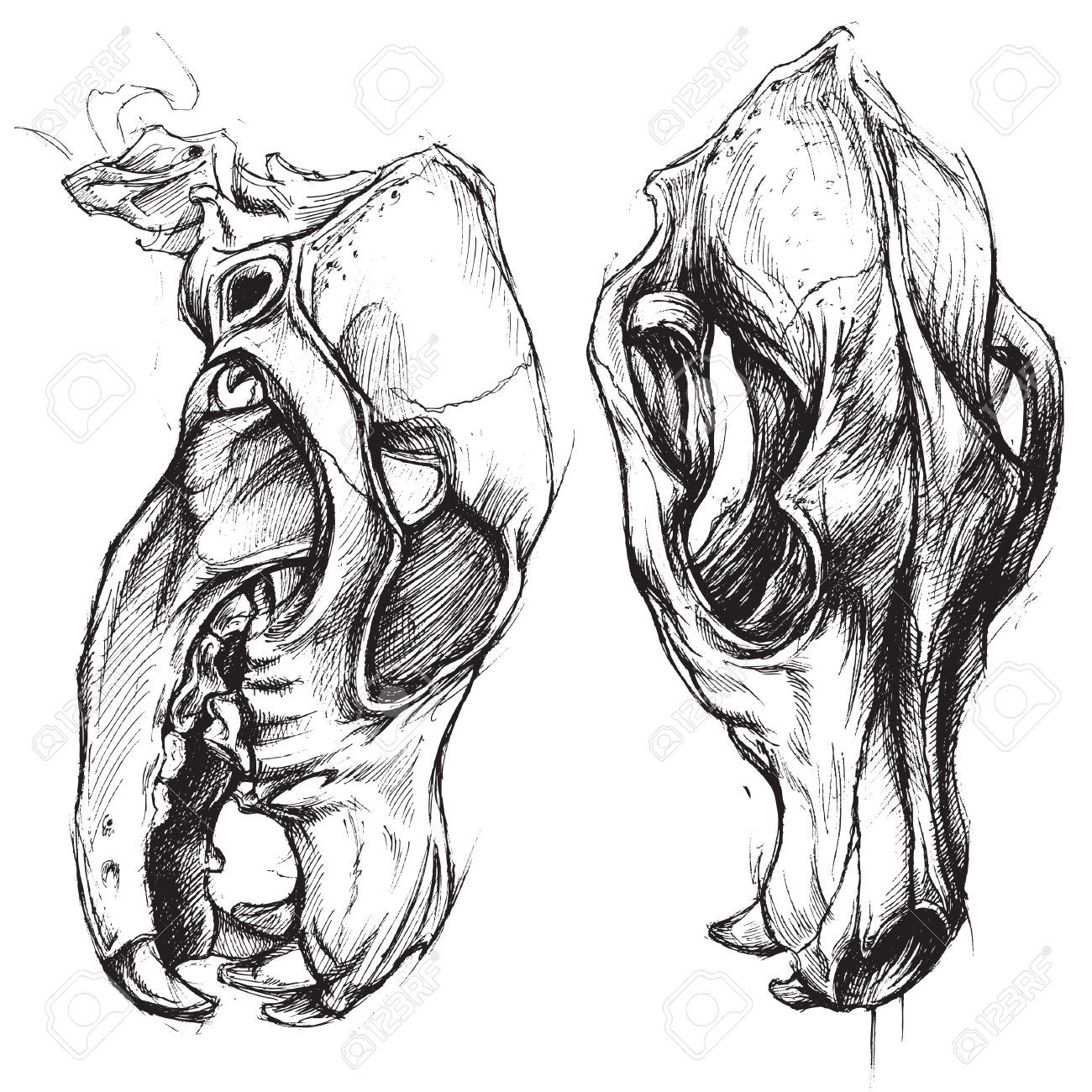 dog skull tattoo - Google Search   Tattoos   Dog skull, Dog