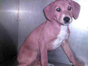 Adopt Mason On Adoptable Beagle Beagle Dog Dogs