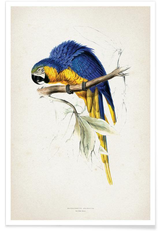 Macrocercus Ararauna Lear als Poster JUNIQE Affiches