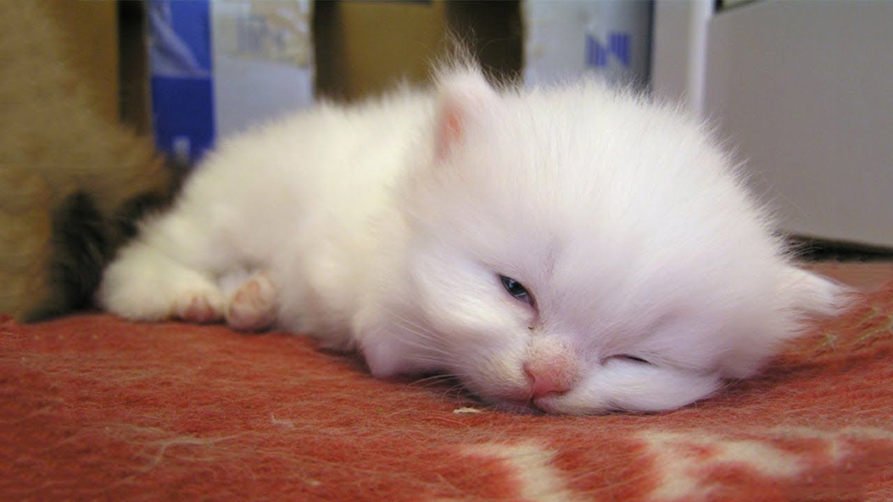 Little Kitten Suddenly Wakes Up After Having Nightmare Kittens Cutest Cute Baby Cats Cute Cats