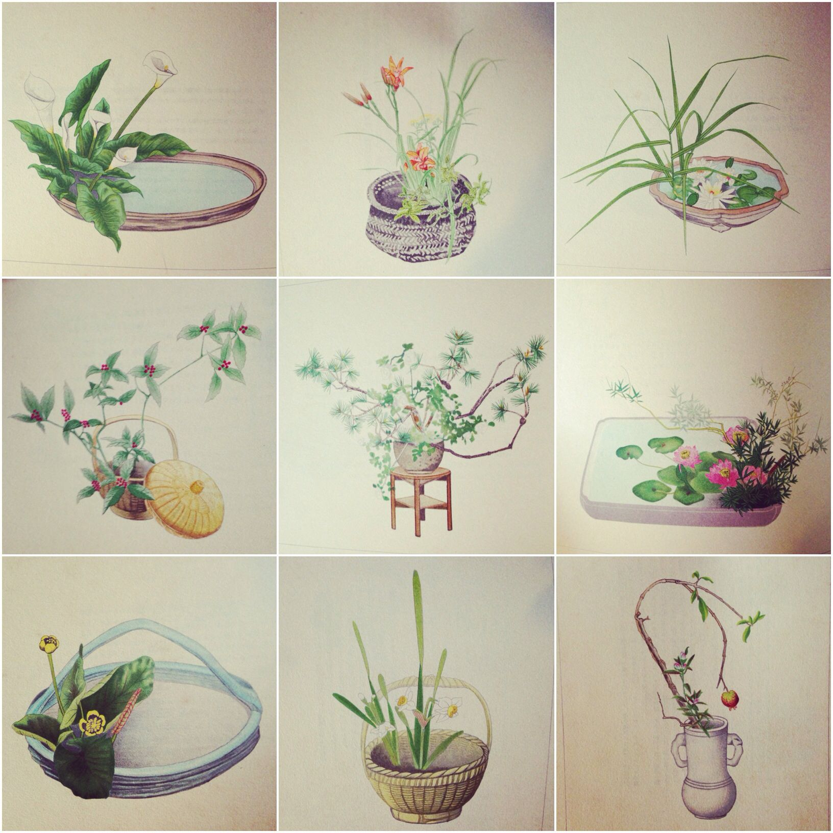 Illustrations from ua new selection of modern flower arrangements