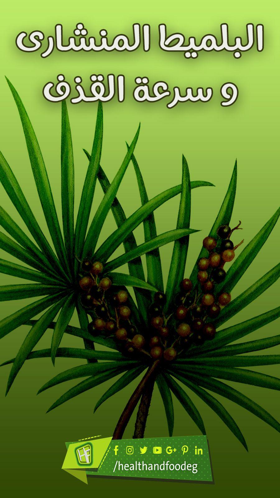 تعرف على تأثير بلميط المنشاري بسرعة القذف Plants