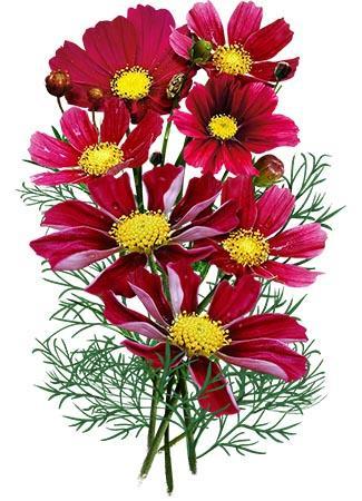 La Musa De Las Flores On Instagram Time Of Cosmos Such A Graceful Easy Unpreten With Images Flower Arrangements Simple Floral Designs Arrangements Flower Arrangements