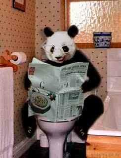 Panda on the toilet