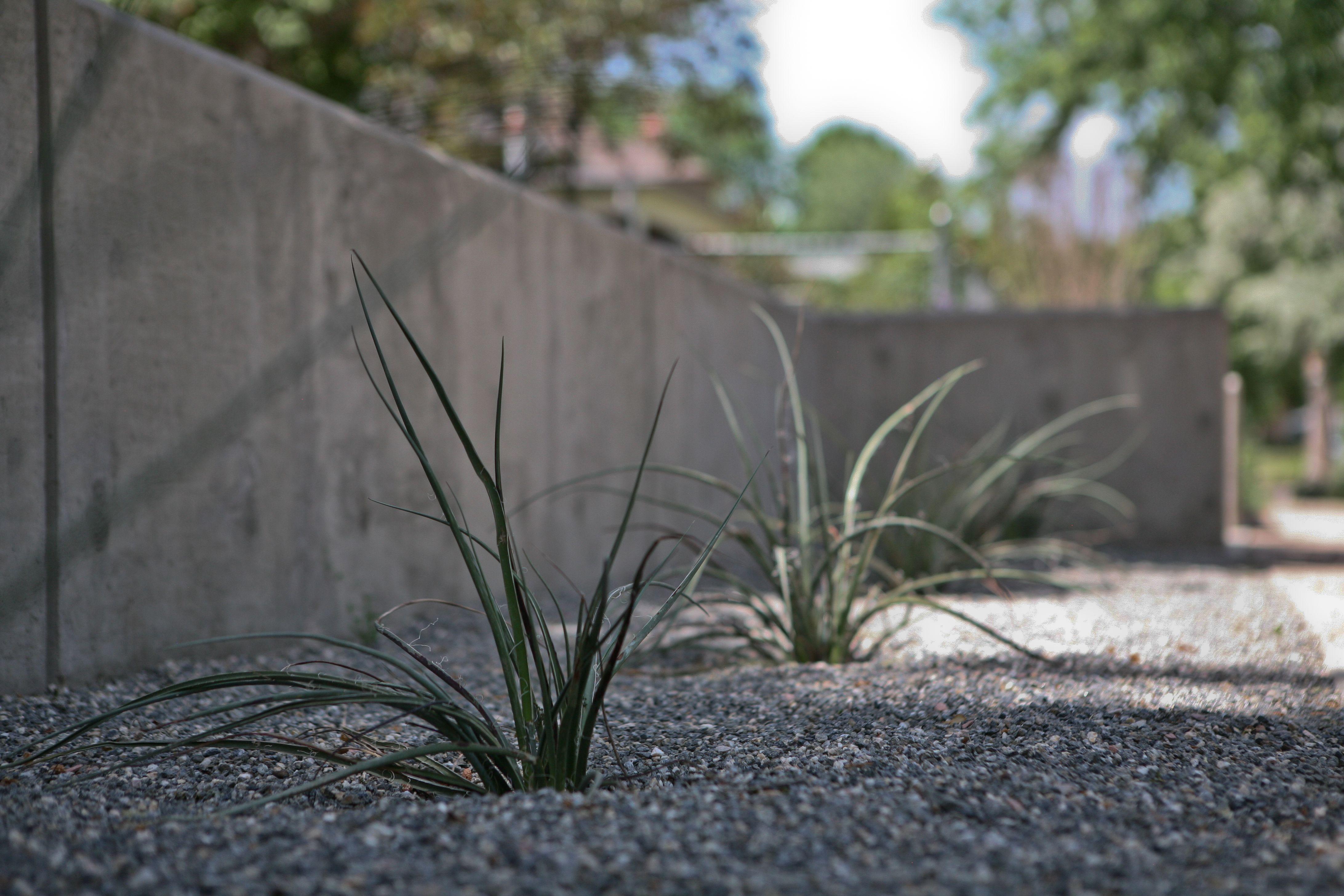 Concrete retaining wall Landscaping Pinterest Concrete