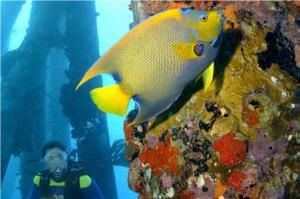 Discover 7 Natural Wonders of the Caribbean: Bonaire National Marine Park