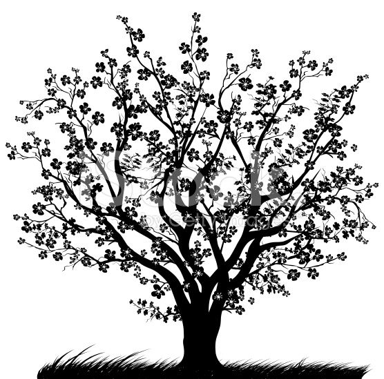 Stock Photography Search Royalty Free Images Photos Cherry Tree Evergreen Tree Tattoo Tree Illustration