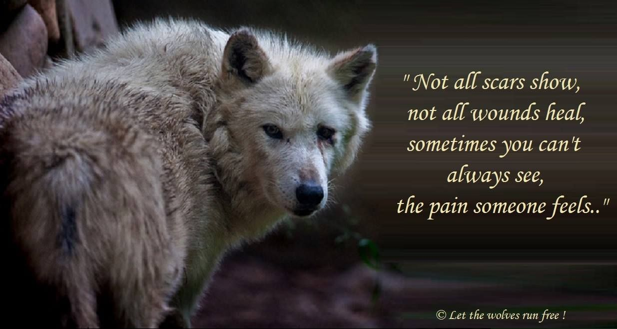 The Pain Someone Feels Loups Loup Gris Citation Animaux