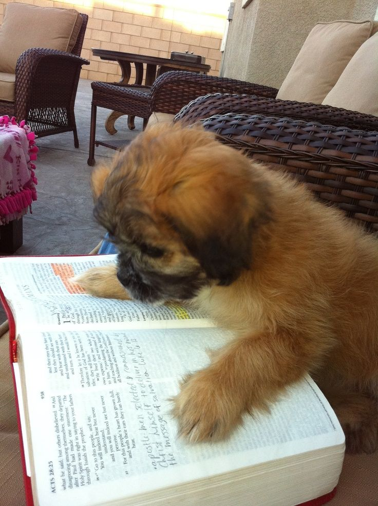 Image result for read to a dog kid