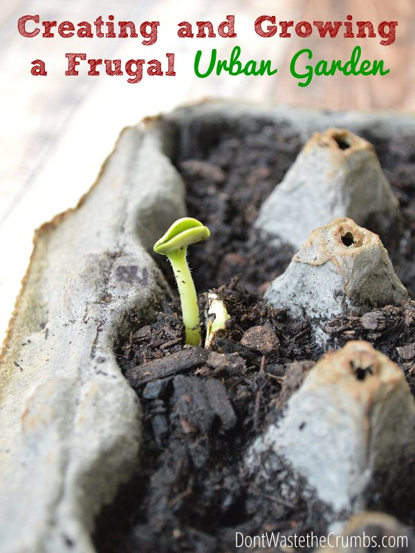 Creating and Growing a Frugal Urban Garden | Ideas to get your own garden started, no matter the space, with as little money out of pocket as possible. | DontWastetheCrumbs.com