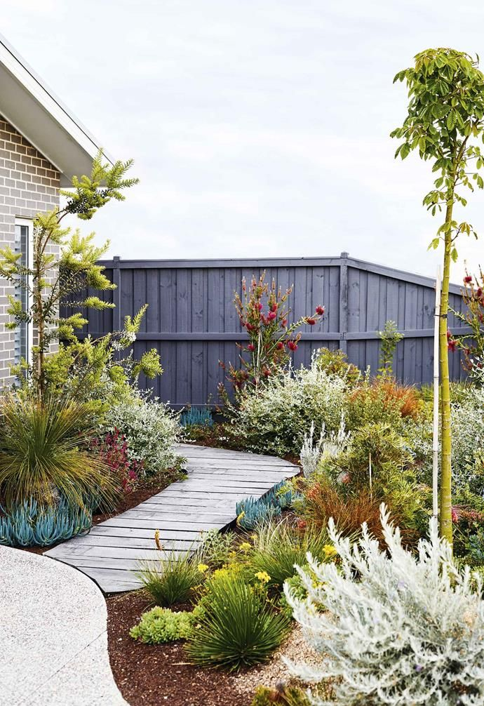 An easy-care coastal garden in Torquay with colourful plants