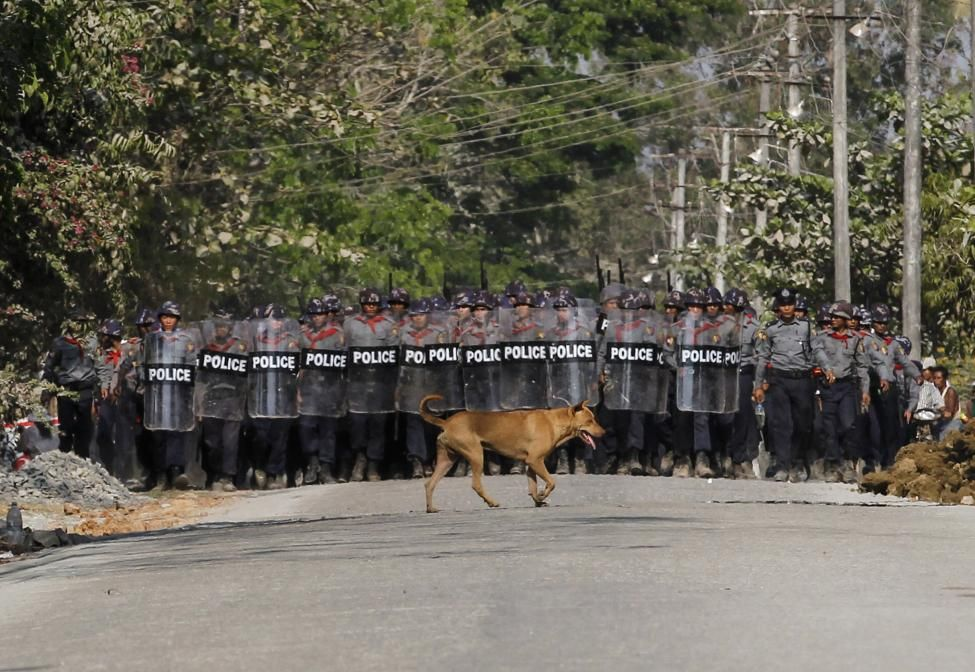 A dog walks past in front of a police line after the violence in Letpadan March 10, 2015. REUTERS/Soe Zeya Tun