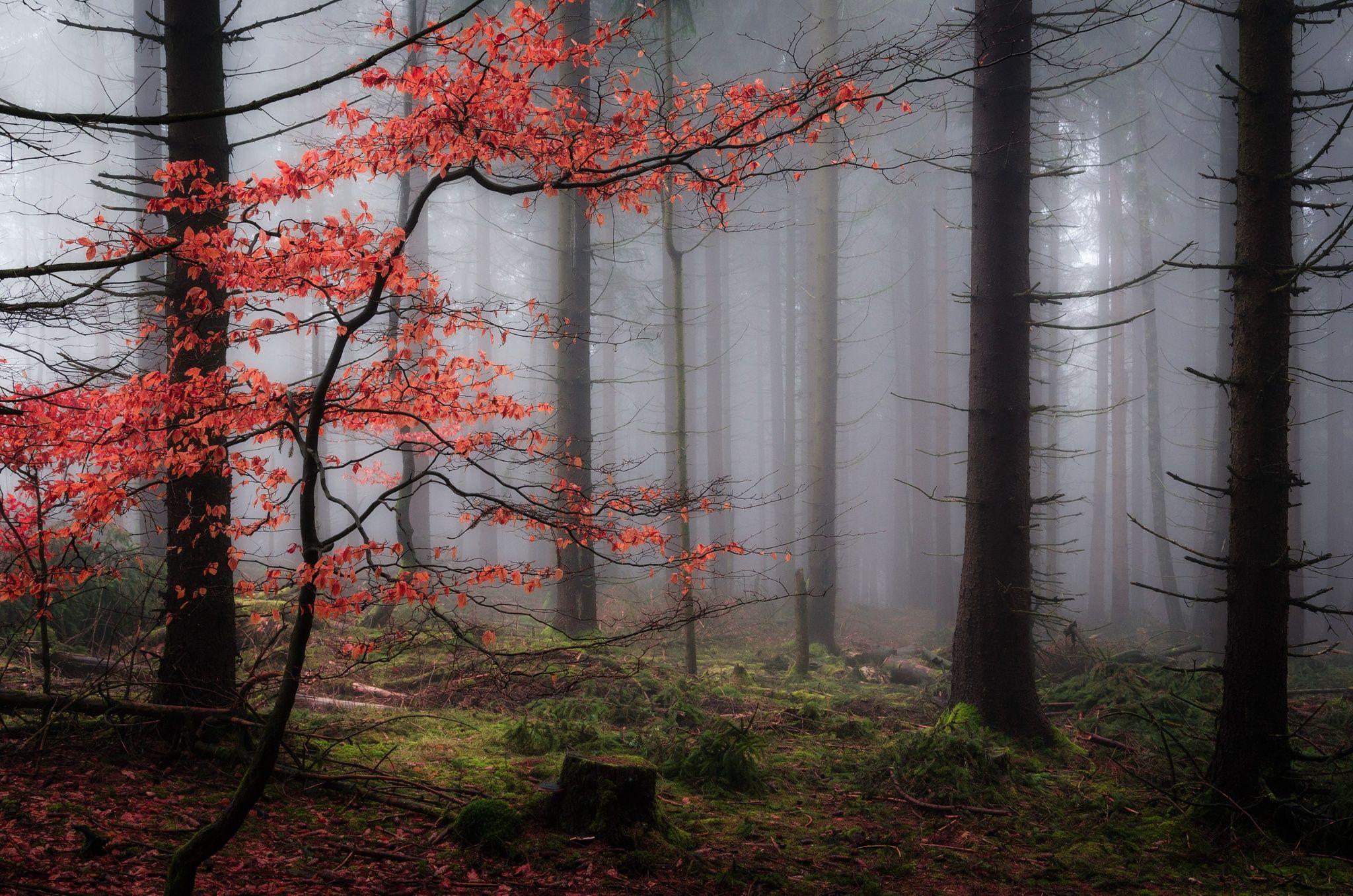 Photo autumn magic