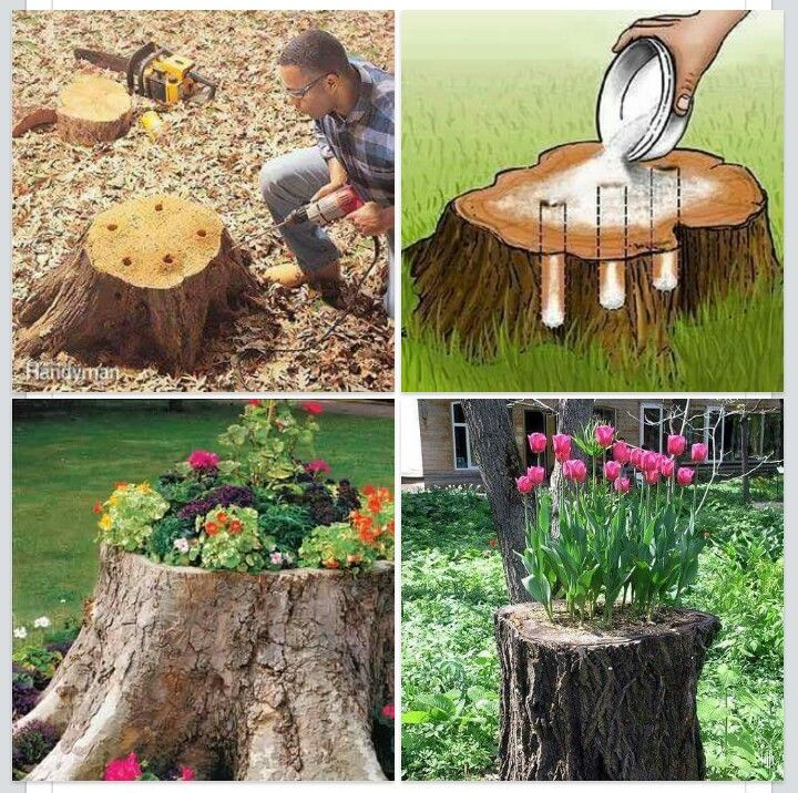 Attrayant Turn A Old Tree Stump Into A Awesome Flower Pot