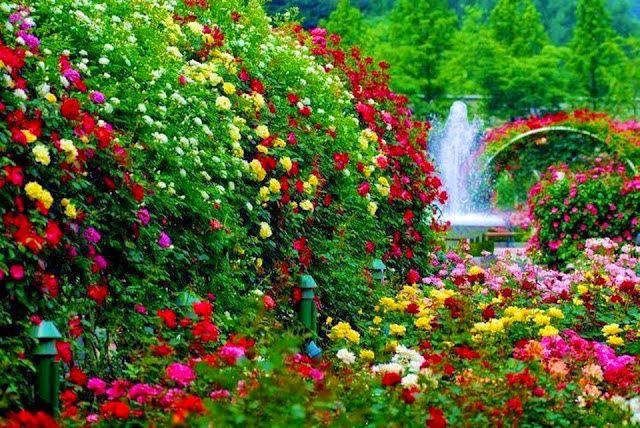 Rose Garden With A Waterfall Nature Flowers Waterfall Roses Garden Beautiful Gardens Cottage Garden Borders Flower Garden