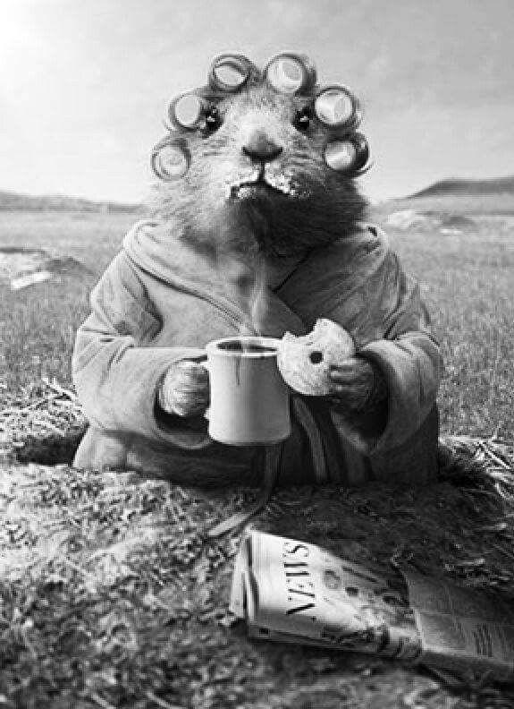 ☮ American Hippie ☮ Good Morning!