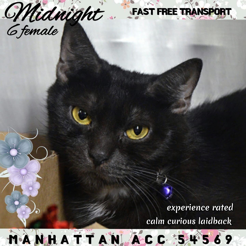 catsrangels2 🐈🌸🌷🐶🍂 ️🍁 on Cats, My animal, Dachshund rescue
